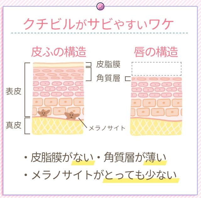唇がサビやすい原因の肌断面図