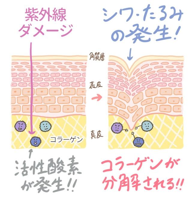 活性酸素がコラーゲンを破壊してシワが発生する